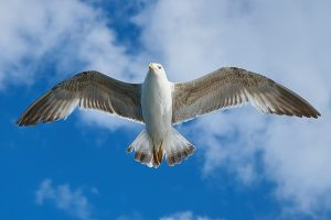 ecrivain-public_22_seagull
